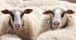 heltäckningsmatta ull