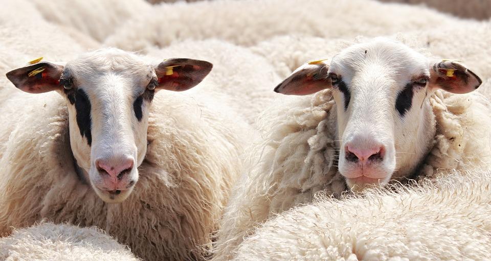 heltäckningsmatta av ull